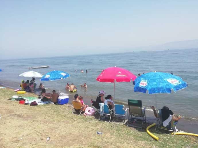 חוף שקמים בכנרת. צילום: יפעת קרוננפלד איגוד ערים כינרת