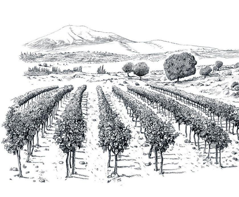 """לסומקה מבציר 2012 יש בשלות ולא מעט 'משקל'. זה  יין מאוד 'רציני', כזה שנבנה למרחקים ארוכים... (צילומים: יח""""צ)"""