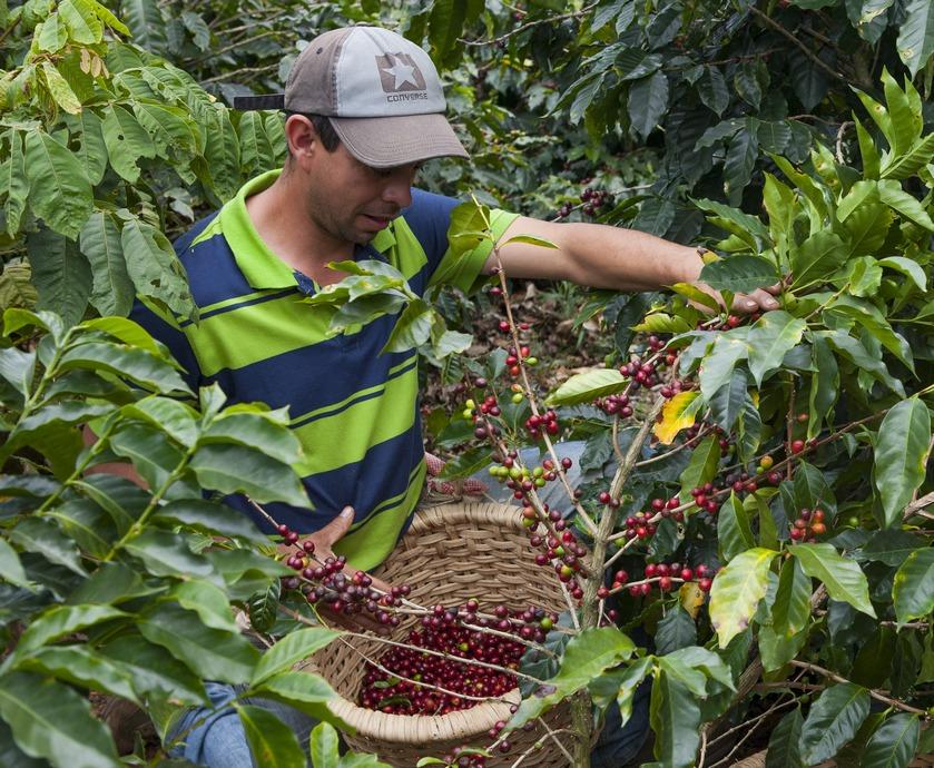"""ארצות הקפה - כן, ארץ הסמבה, הקרנבל והכדורגל היא גם המדינה המרכזית ביותר בעולם כשמדובר בקפה... (צילומים: יח""""צ)"""