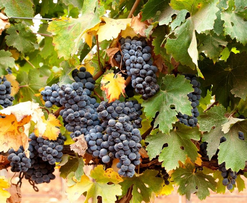 """אז נכון שבאידיליה יין כזה כמו של רקנאטי צריך להיות זול יותר, אבל אנחנו עדיין צריכים עוד יינות כמו הבלנד הסגול הזה... (צילומים: יח""""צ)"""