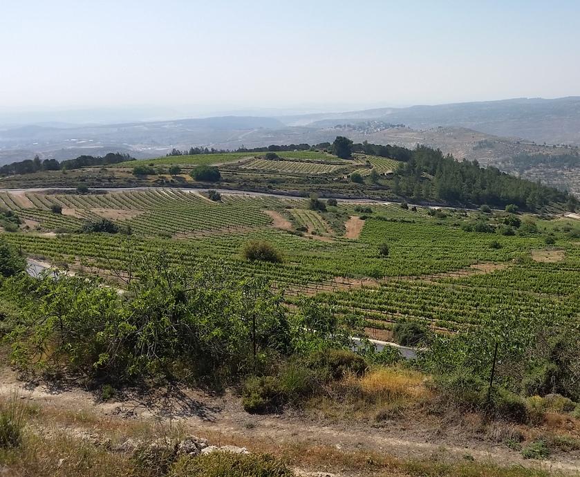 """אני בלנד ירושלמי - אתם יודעים, לפעמים לא צריך את כל השפיל והתפאורה מסביב בשביל ליהנות מכוס יין טוב... (צילום: יח""""צ)"""