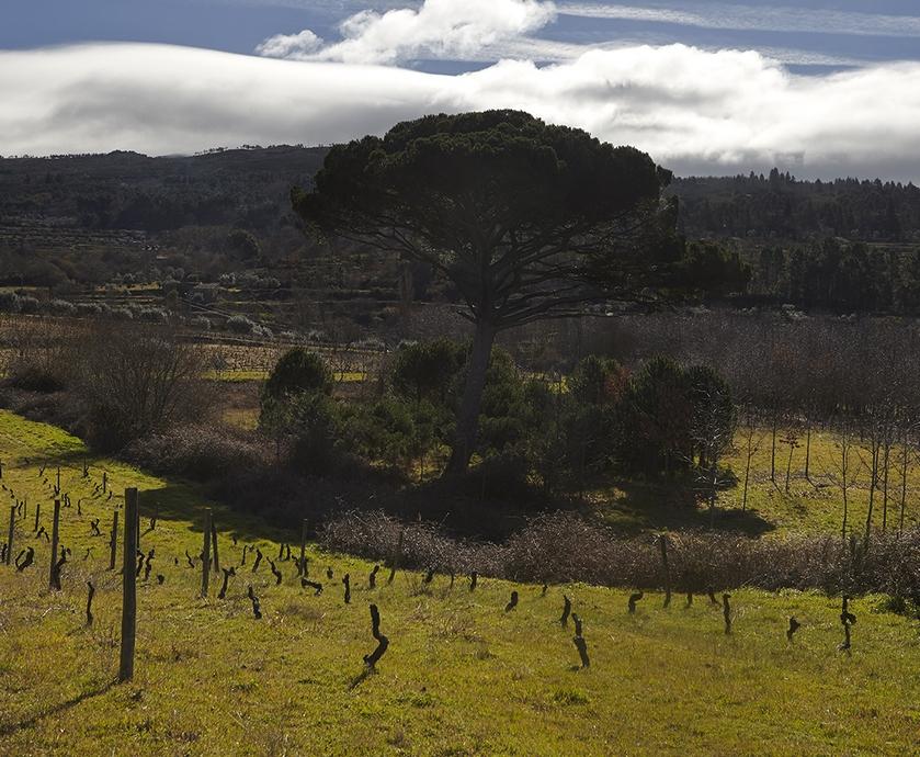 """יינות פורטוגל - השידוך של יינות פורטוגל למטבח הים-תיכוני ייצר סיפוק רב גם בקרב לוגם היין הישראלי... (צילומים: יח""""צ)"""