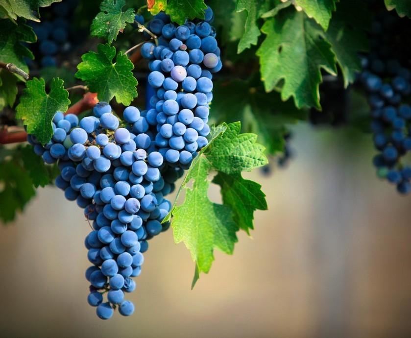 """הרי יהודה - זה לא ממש סוד שבכל מה שקשור לחלוקה לאזורי יין, ישראל לוקחת את הזמן שלה... (צילום: יח""""צ, יואב אלון)"""