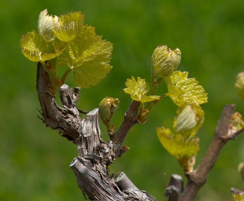 """יינות מאופקים ומלוטשים, המבוססים על פרי טוב ושימוש נבון בחביות, ומביאים לידי ביטוי את הזנים מהם נעשו... (צילומים: יח""""צ)"""