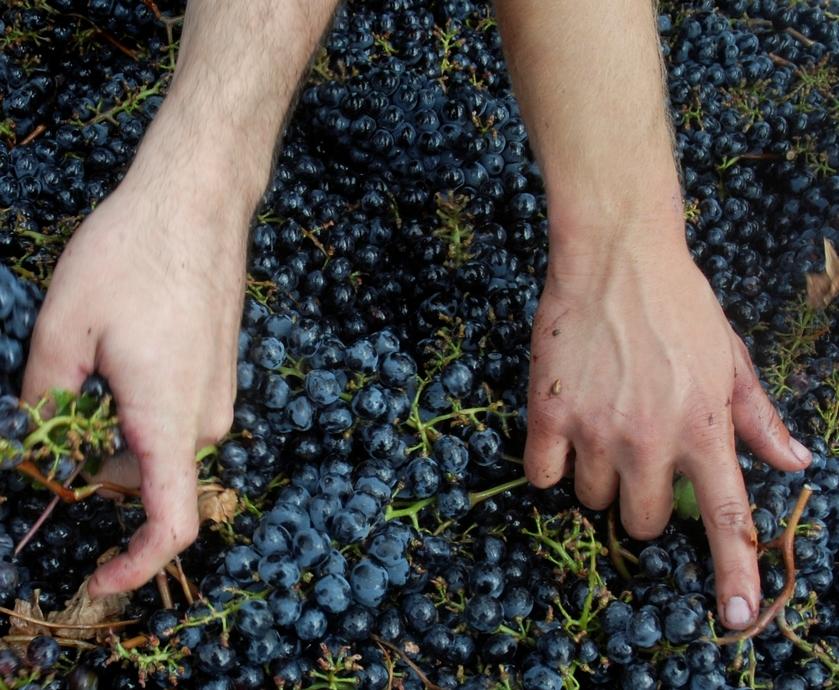 """יינות 'קסטלו די פונטרוטולי'. גם מי שלא משתגע על יינות איטליה יצליח ליהנות מהם מאוד... (צילומים: יח""""צ)"""