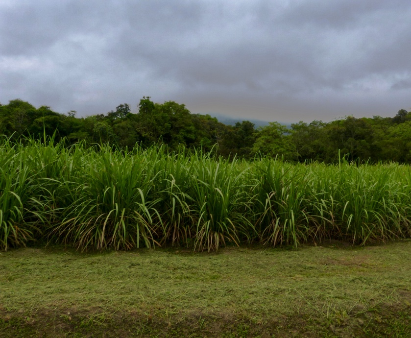 קשאסה מיוצרת ממיצי סוכר טריים, ורק בברזיל, כשאחוז האלכוהול הוא בין 38 ל-48 אחוז...(צילום:מיכל לויט)