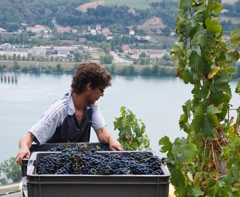 """יין של קיץ - כשמקררים אותו המבנה שלו מתהדק, הטעמים שלו הופכים ממוקדים והוא מרגיש מרענן יותר... (צילום: יח""""צ)"""