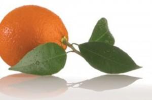 תפוז -  יחצ